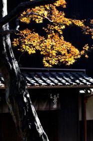 2017年京都 名残りの紅葉・今宮神社(あぶり餅店は定休日)