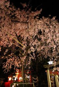 水火天満宮の夜桜2018