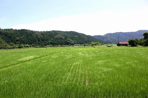 余呉の田園風景