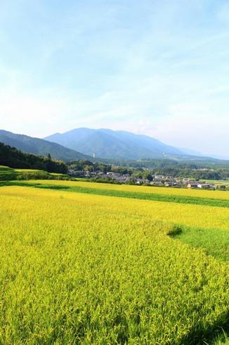 晩夏の伊香立田園風景